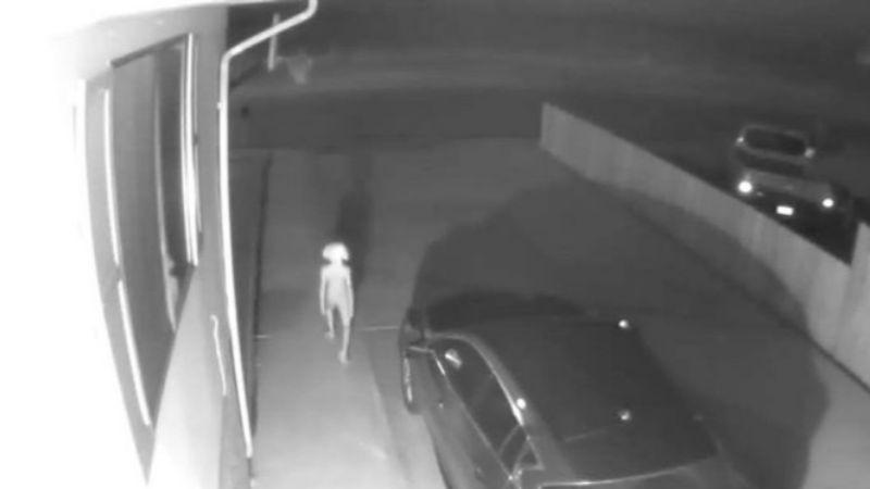 Странное существо попало на видео: пользователи Сети гадают, что засняла камера видеонаблюдения