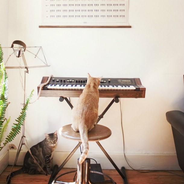 10 фото, на которых кошки заняты человеческими делами