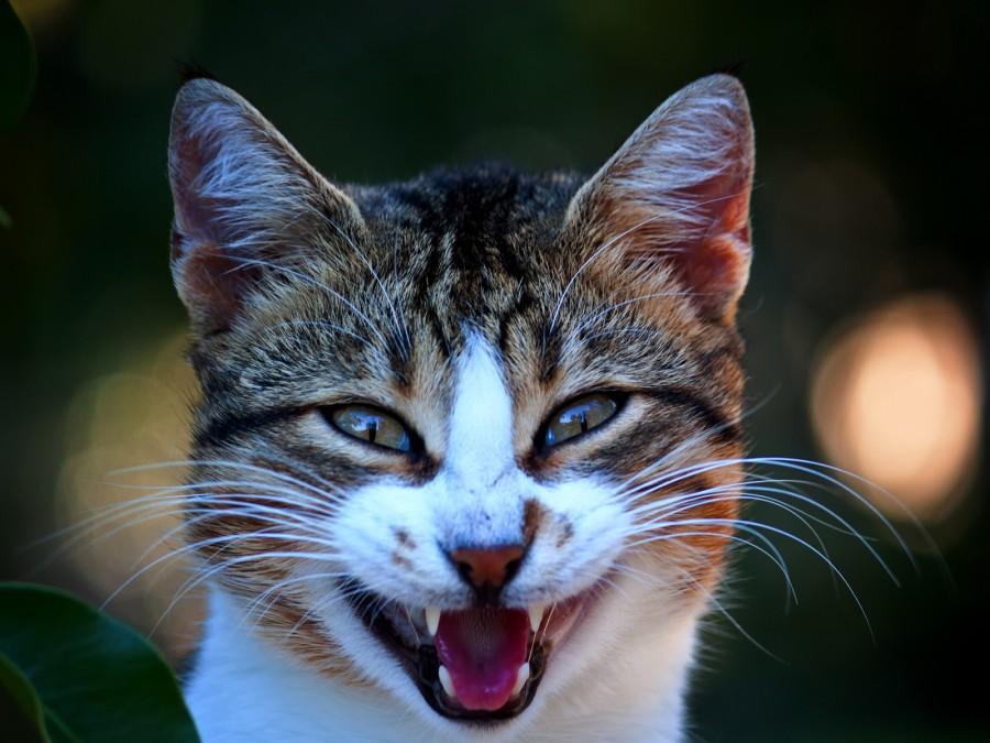 Аниме девушек, кот улыбается картинки