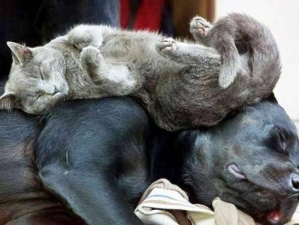 10 фотографий кошек, которые отказываются быть нормальными