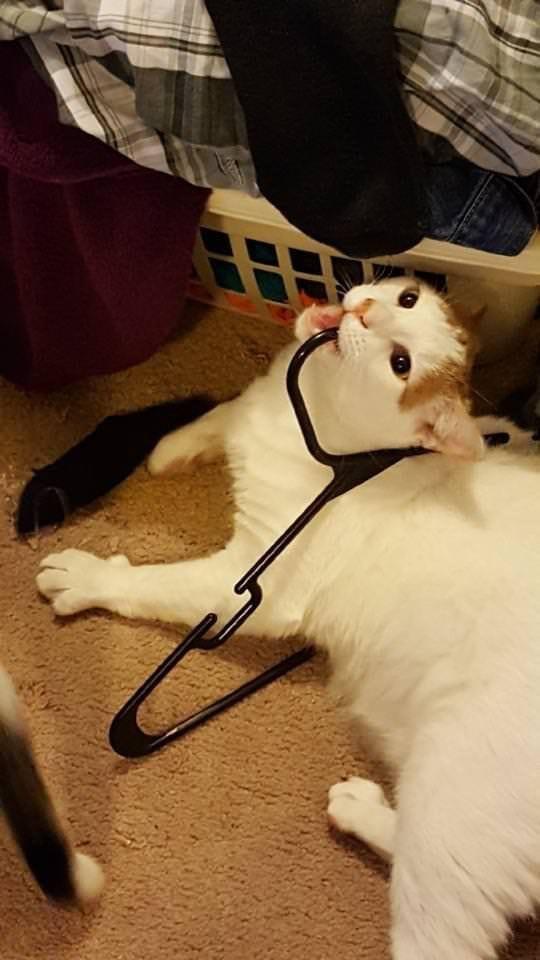 10 фото котов, которые не отличаются умом и сообразительностью