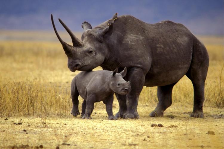 Вымершие животные 21 века