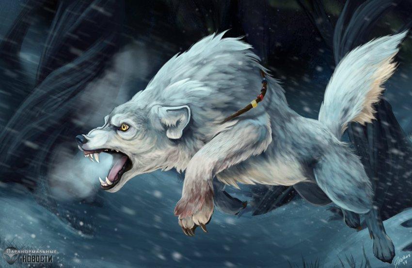 Неуловимые гиеноподобные волки Северной Америки