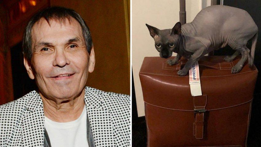 Мошенник обманул семью Алибасова на 800 тысяч рублей, вернув чужого кота