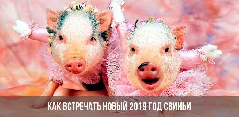 Как правильно встречать Новый 2019 год Свиньи: приметы, блюда, традиции