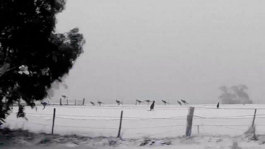 В Австралии выпал снег: метеорологи назвали причину