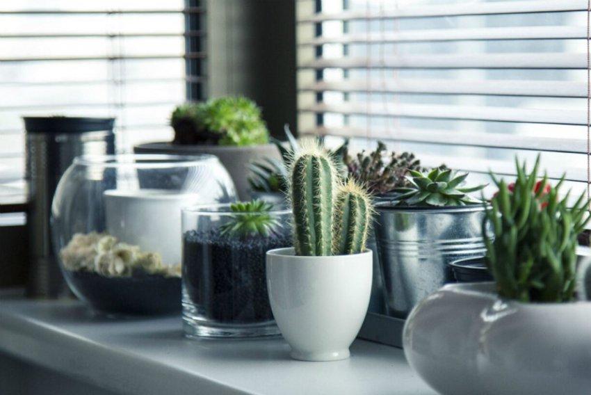 Эти комнатные растения притягивают неудачу и болезни в дом: от них стоит избавиться как можно быстрее