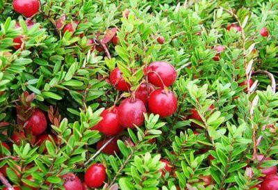 7 продуктов, которые следует есть осенью