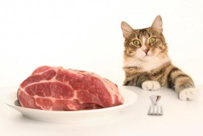Ветеринары назвали самые опасные для котов и кошек продукты