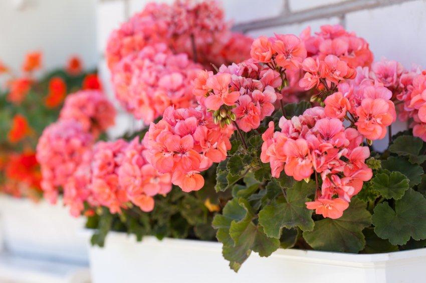 Комнатные растения, обладающие магическими свойствами: они способны защитить дом от зла и несчастий