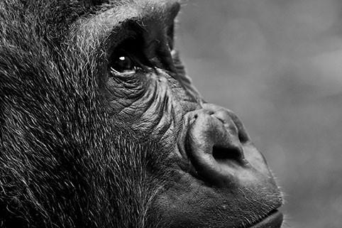 Под знаком какого животного восточного зодиакального календаря пройдет 2020 год?