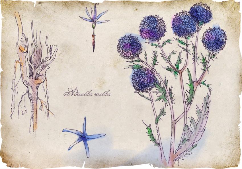 История магических трав славян с древнейших времен