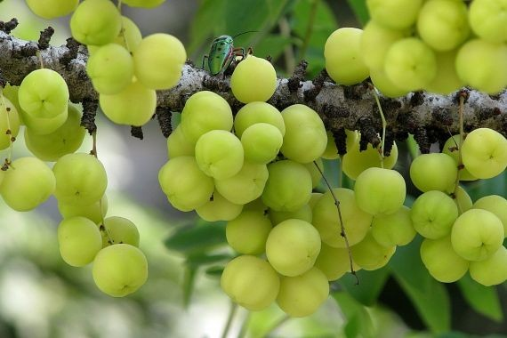 Диетологи навали фрукт, который поможет избавиться от жира на животе