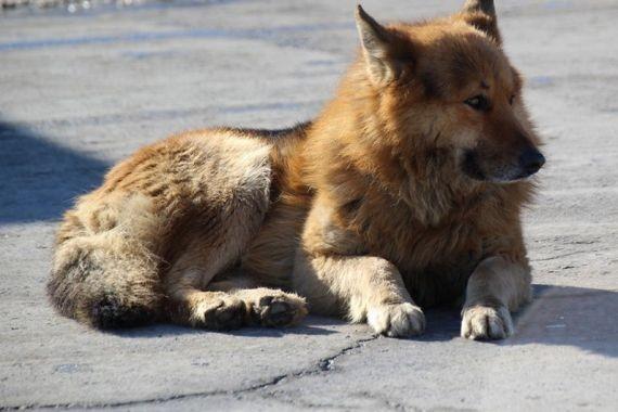 В Саратове заметили собаку с человеческой головой в зубах