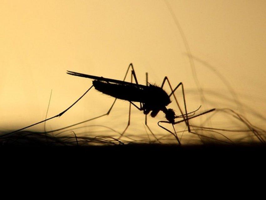 Бразильской проект ГМО-комаров пошёл не по плану и провалился