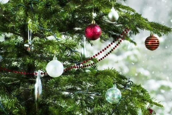 Россиянам объяснили, когда лучше ставить елку на Новый год