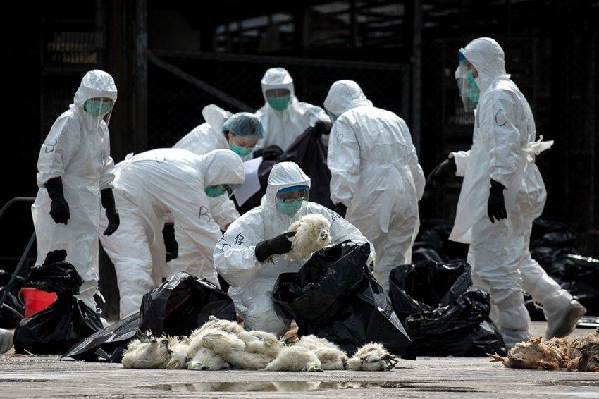 Дойдёт ли обнаруженный в Китае вирус SARS до России?