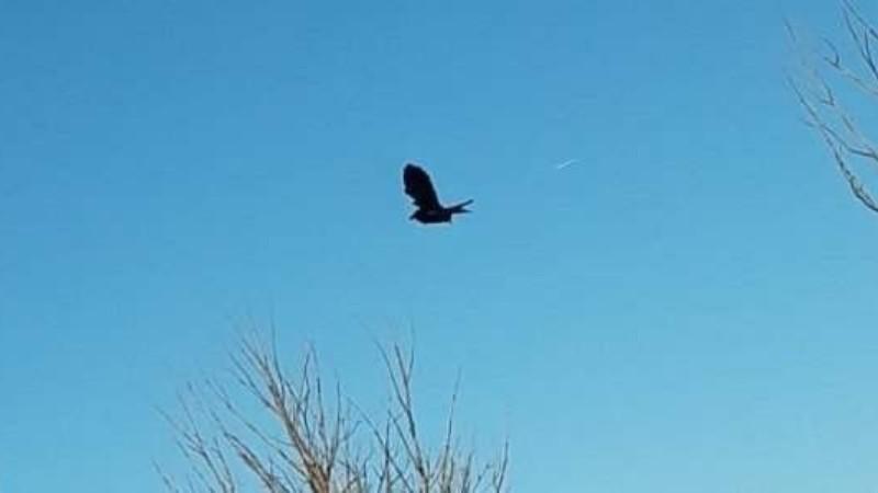 В США птица неподвижно зависла в воздухе: в сети появилось видео