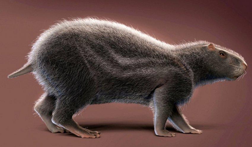 Ученые нашли на территории Бразилии останки огромных древних крыс
