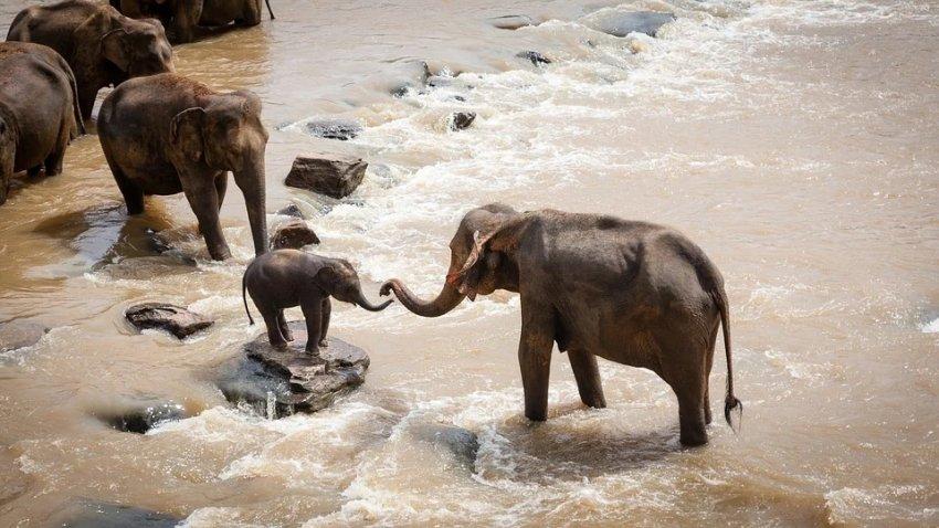В Южной Африке по неизвестным причинам погибли больше ста слонов