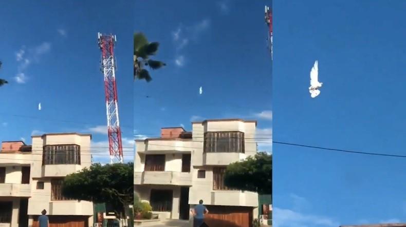 В Колумбии запечатлели на видео, зависшего в небе белого голубя