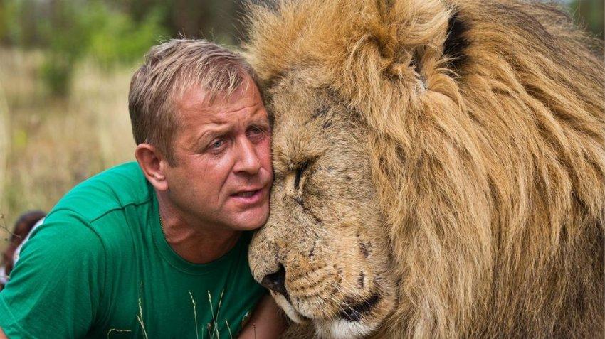 Как разогнать львов одним тапком и стать коронованным вожаком
