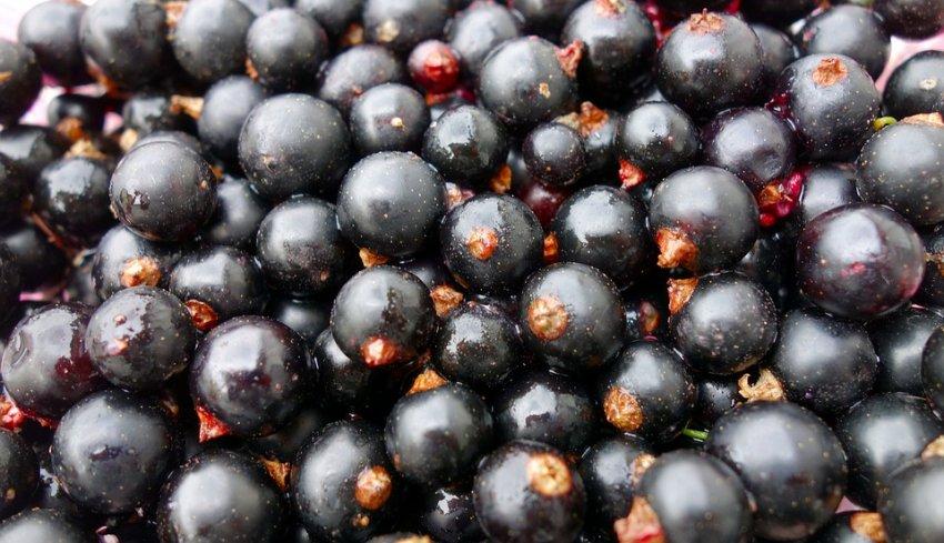 Врачи назвали самую полезную ягоду: предотвратит рак и укрепит сердце