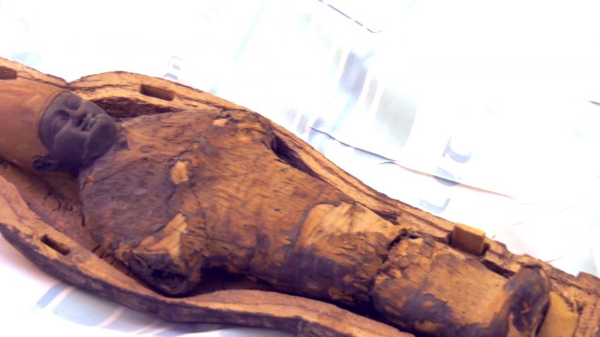 Мумия, найденная в детском саркофаге, оказалась не человеком