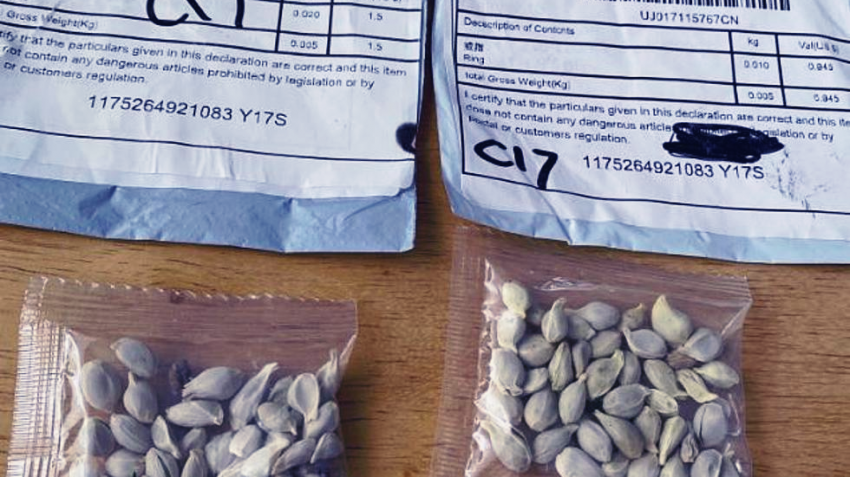 Кто-то по почте присылает жителям США, Канады и Великобритании странные семена