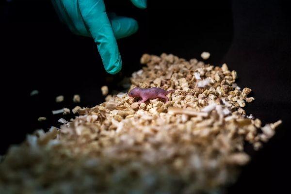 Примеры непорочного зачатия у животных