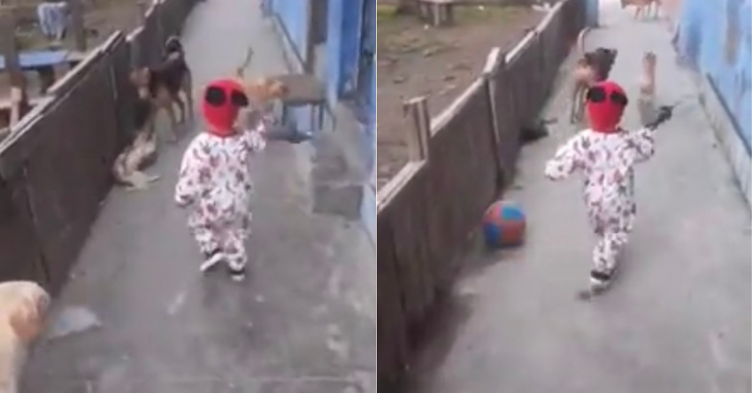 Перед мальчиком, играющемся с собаками, из ниоткуда появился мяч