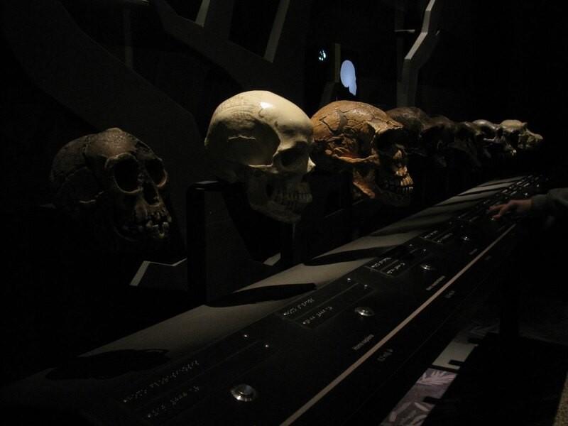 Можно ли предсказать, как люди будут эволюционировать дальше?