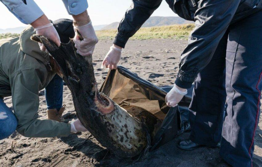 Экологическая катастрофа у берегов Камчатки