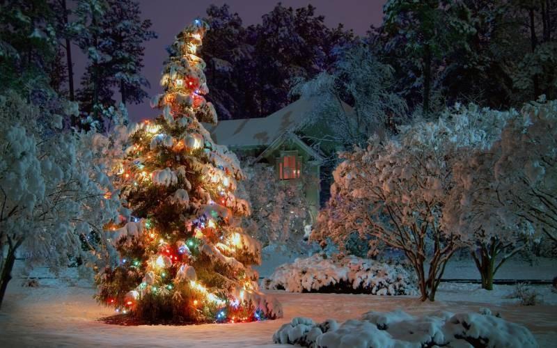 Праздники, которые отмечают в предверьи Нового Года 31 декабря 2020 года
