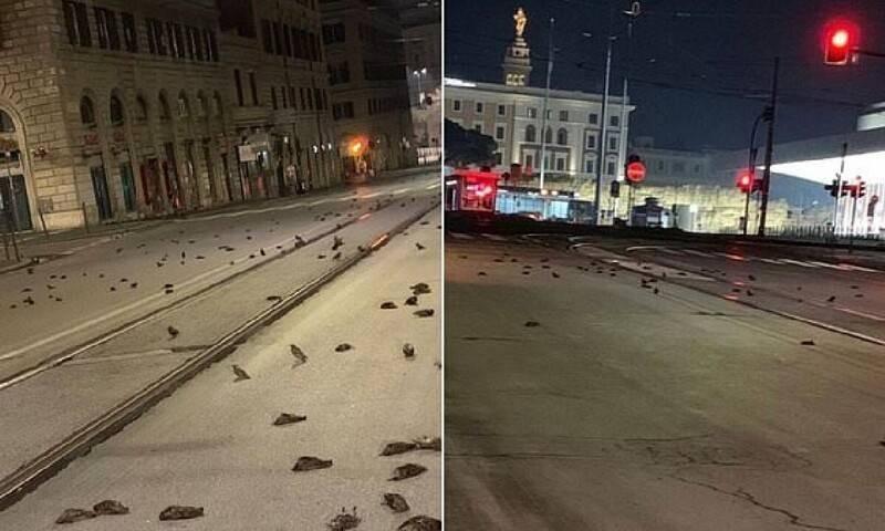 Тысячи мертвых птиц рухнули на заснеженные улицы из-за салюта