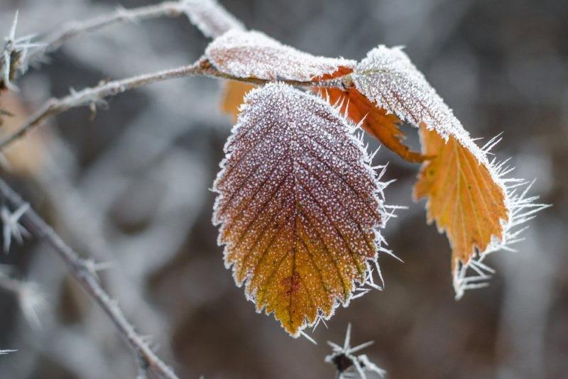 Синоптики рассказали о похолодании в Москве на следующей неделе