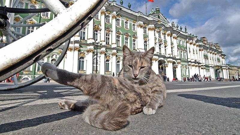 Как коты из Эрмитажа получили наследство от любителя животных