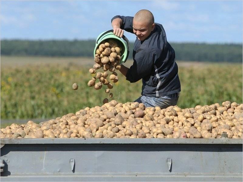 В каких случаях россиян могут оштрафовать за выращивание картошки