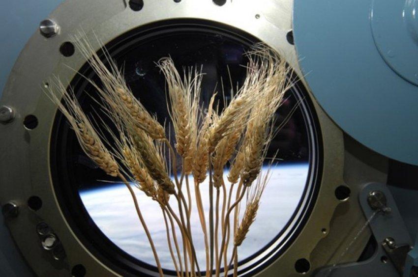 Подборка странных и необычных космических экспериментов
