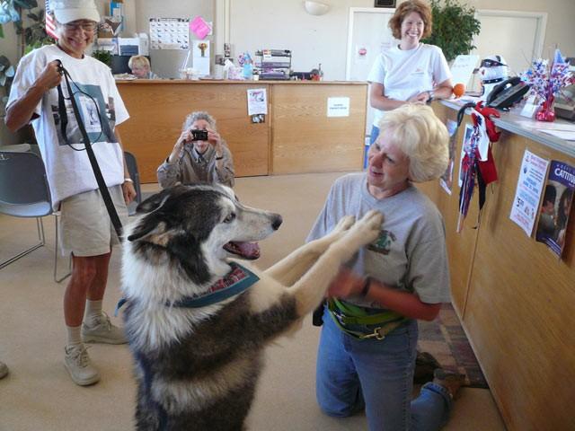 Государство поможет в устройстве приютов для животных