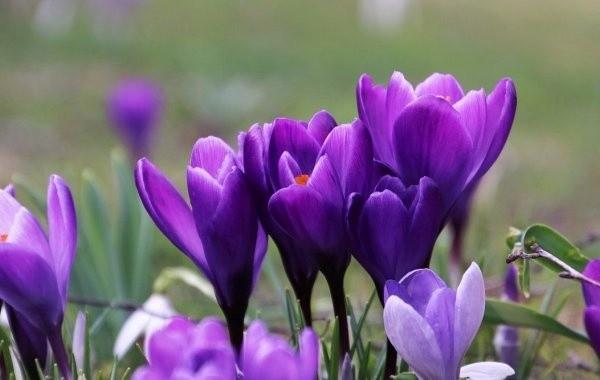 Названо количество выходных дней на 8 марта