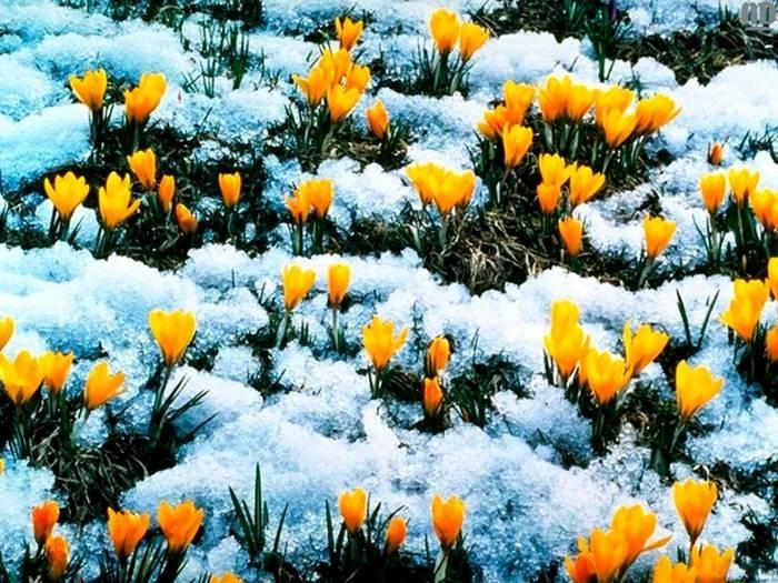 Москву посетила метеорологическая весна