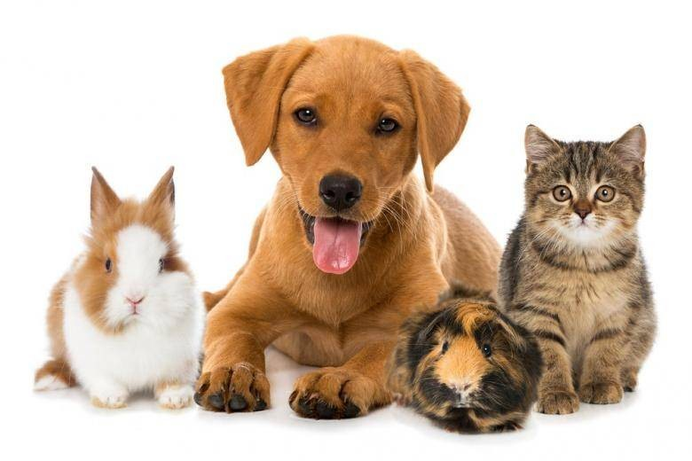В Думу внесли новый закон о животных