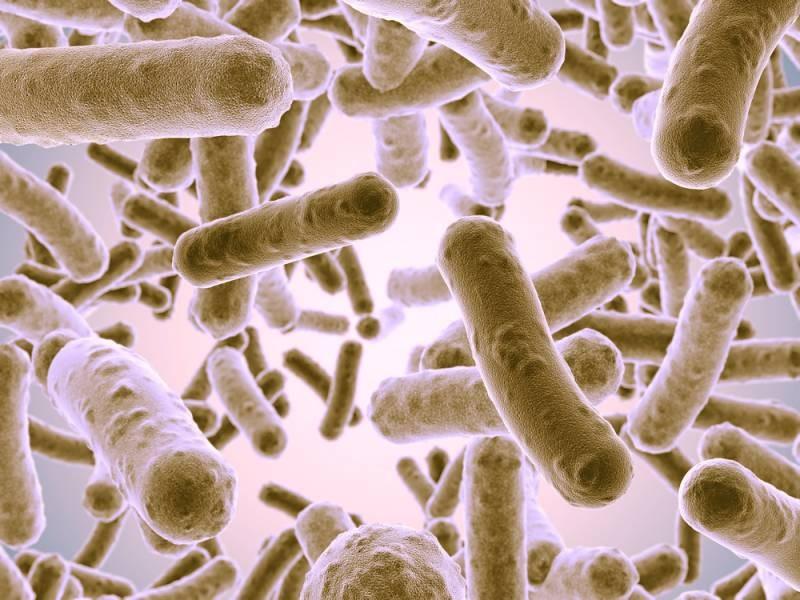 6 живых организмов, которые нарушили законы физики и биологии