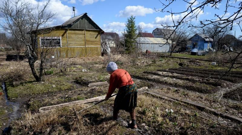 Запрет на петрушку: почему россиянам не разрешают выращивать зелень, ссылаясь на закон