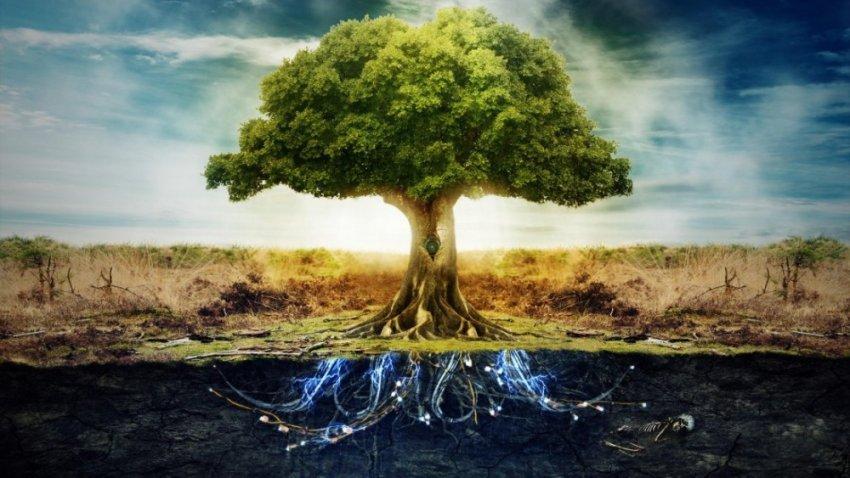Сюзанна Симард: О необыкновенных способностях деревьев