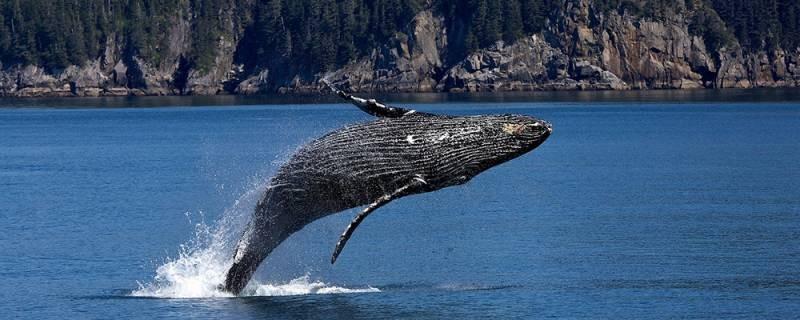 Всемирный День китов и дельфинов отмечают и в России 23 июля 2021 года