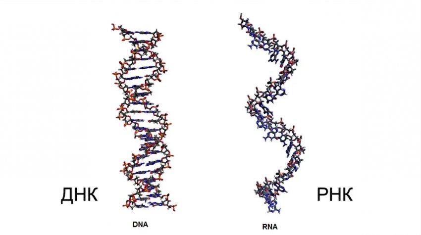 Открытия вирусологов могут изменить биологию