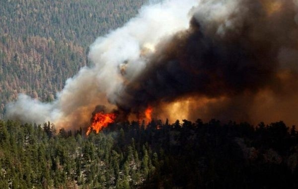 Стала известна площадь лесных пожаров в Якутии